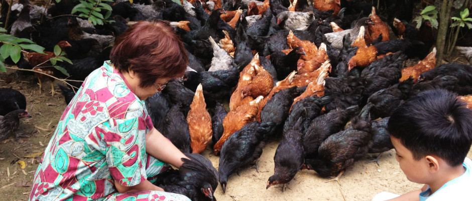 Native Chicken Farm